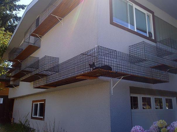 Paseo externo seguro para gatos