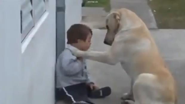 perro-niño