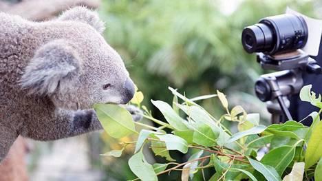 Sydney-Bruce-Aaron-Bill-Reuters_CLAIMA20140404_0119_17