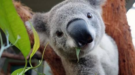 Sydney-Bruce-Aaron-WILD-LIFE_CLAIMA20140404_0120_17