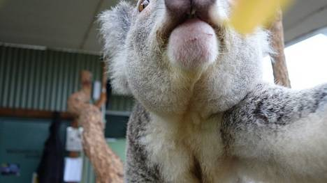 Sydney-Bruce-Aaron-WILD-LIFE_CLAIMA20140404_0121_17