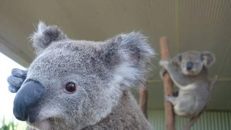 Sydney-Bruce-Aaron-WILD-LIFE_CLAIMA20140404_0124_17