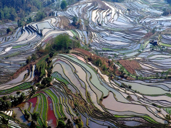 colorful-yuanyang-china