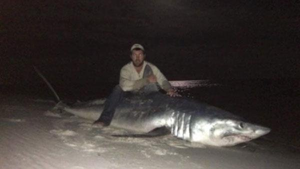 foto tiburon polemica