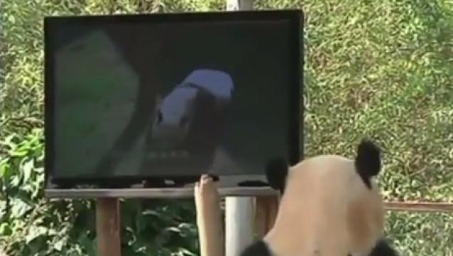 panda-mira-tv