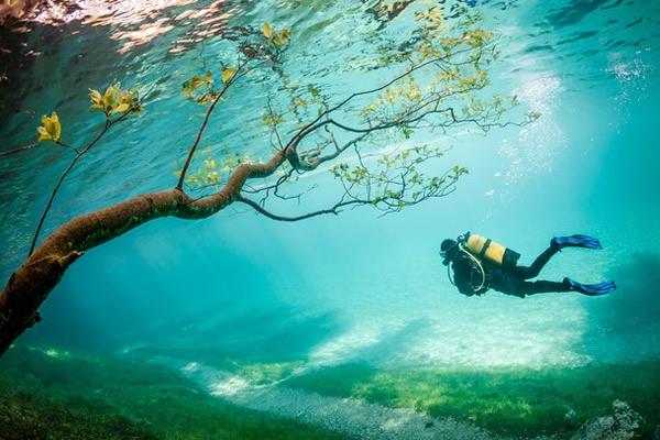diving-magic-kingdom