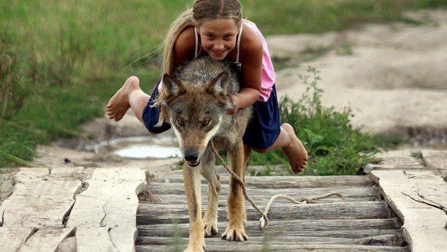 lobos-mascotas1