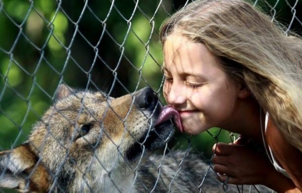 lobos-mascotas3