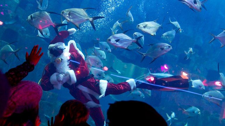 Un acuario en Francia: Navidad bajo el agua