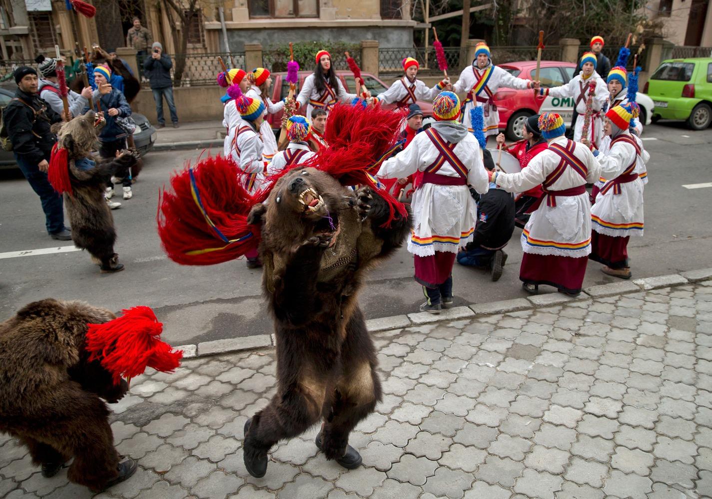 Osos rumania (3)