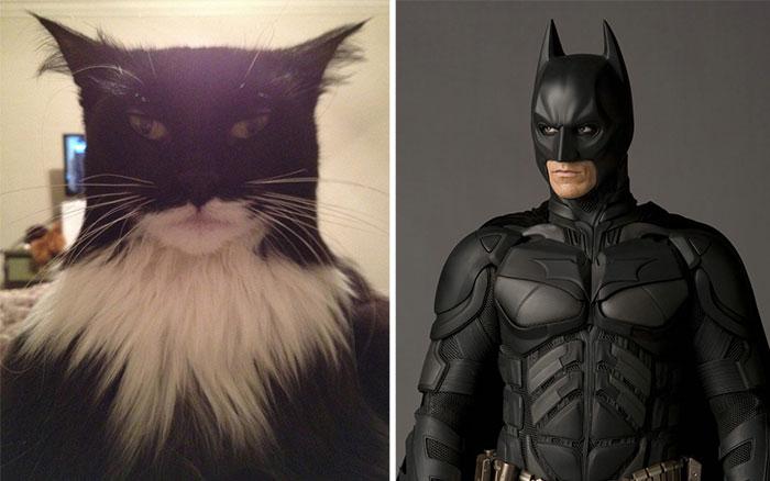 parecidos de gatos