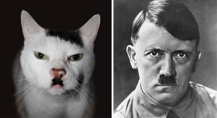 parecidos de gatos1