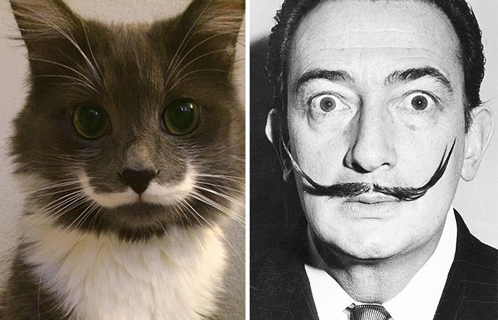 parecidos de gatos2
