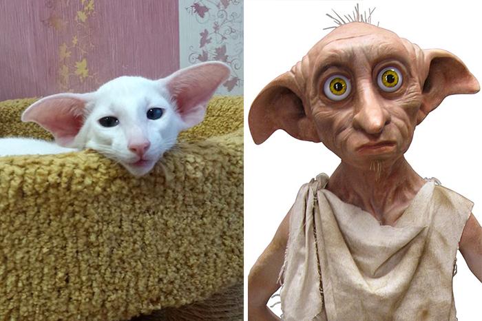 parecidos de gatos3