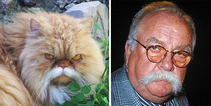 parecidos de gatos4