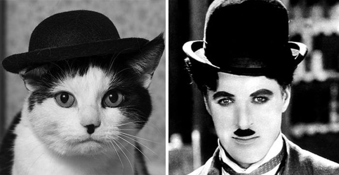 parecidos de gatos8
