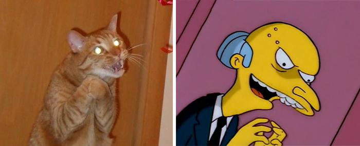 parecidos de gatos9