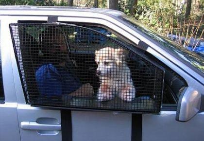Perro jaula auto 2