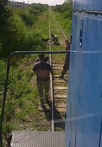perros-ferrocarril-atados-mitre