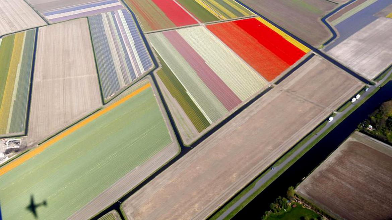 Vista aérea de los campos de flores cerca del parque Keukenhof, también conocido como el Jardín de Europa, en Lisse