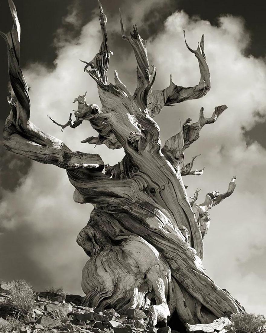 arboles-antiguos-15