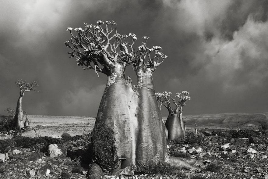 arboles-antiguos-5