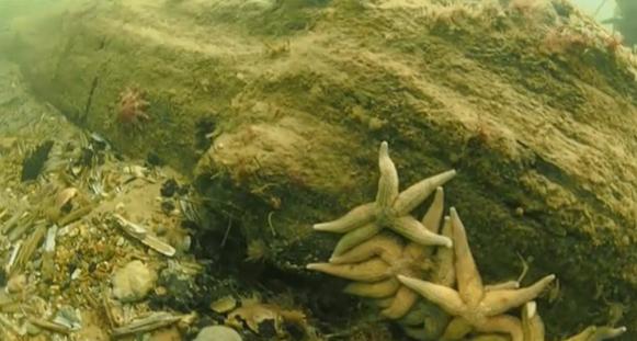 bosque subacuático 2