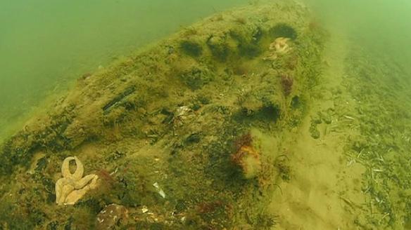 bosque subacuático 6