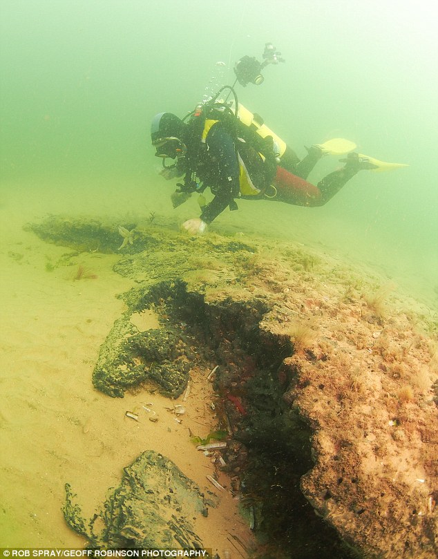 bosque subacuático 7