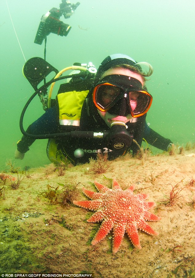 bosque subacuático 8
