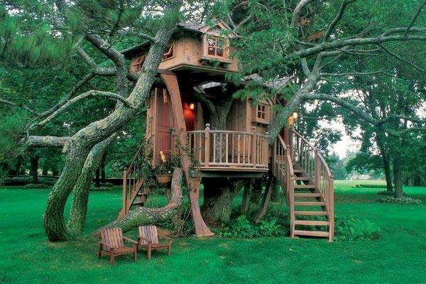 casa del arbol1
