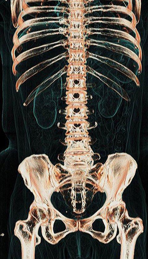 cuerpo-humano1