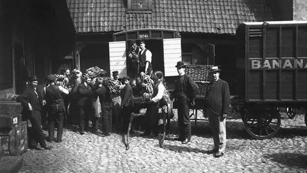 Noruega recibe su primer envío de Plátanos, 1905