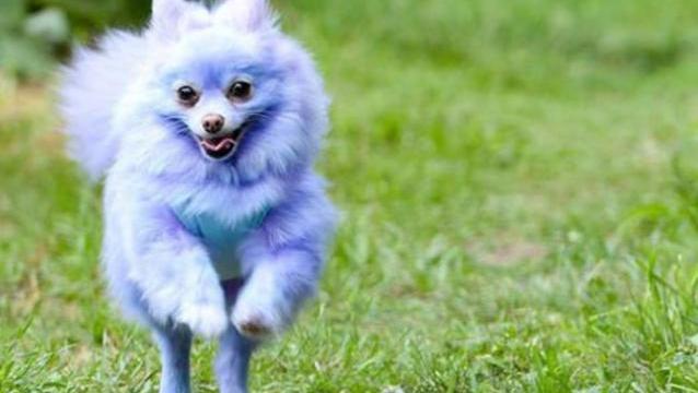 Perro de color 1
