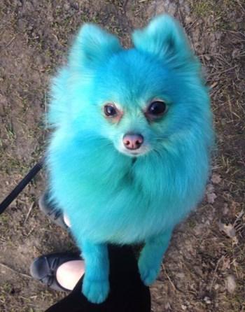 Perro de color 3