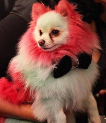 Perro de color 4