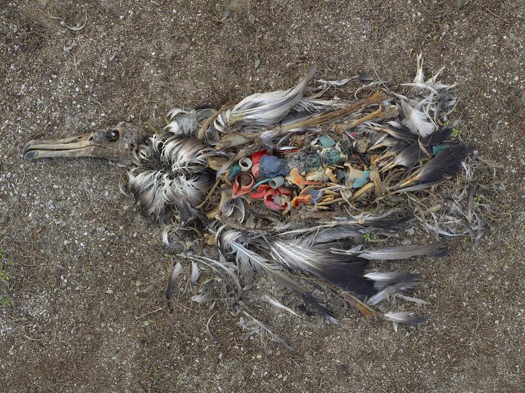 contaminacion (3)