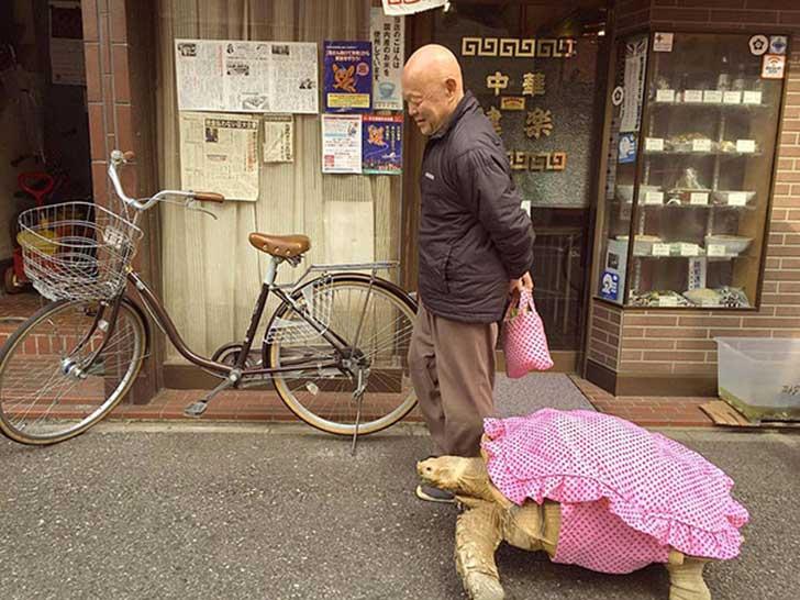 japonés-tortuga2