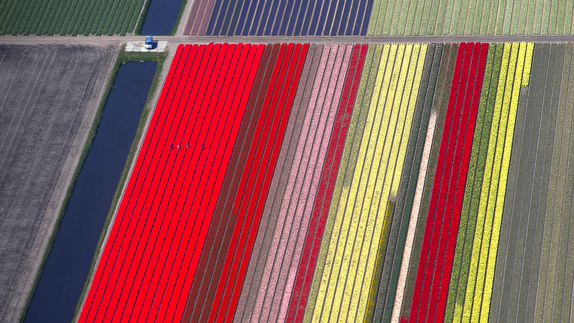 An aerial view of flower fields is seen near the Keukenhof park, also known as the Garden of Europe, in Lisse