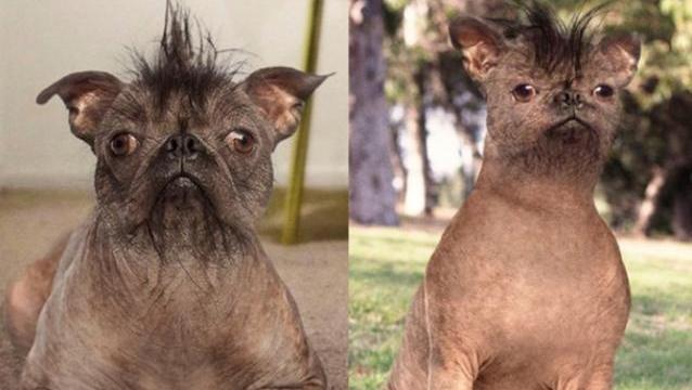 perro-feo
