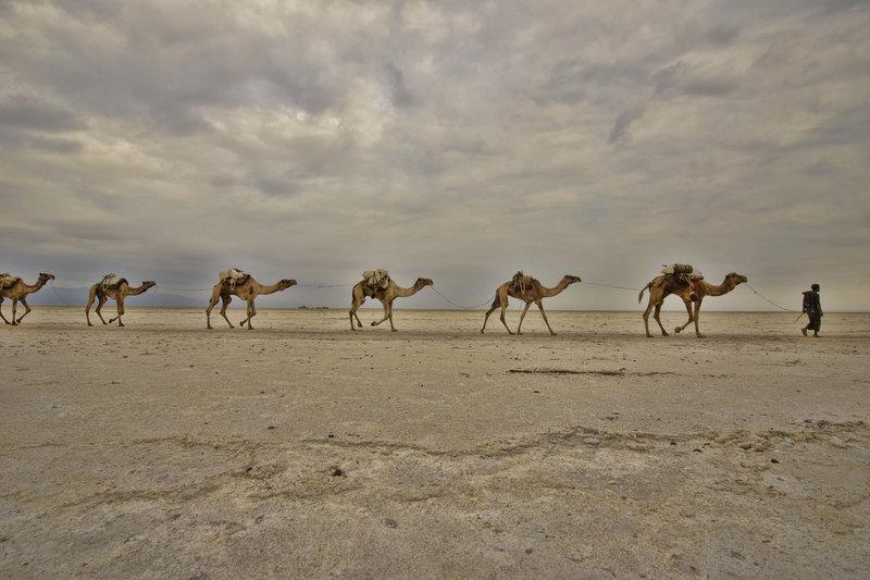10-lugares-mas-planos-del-mundo-desierto-danakil-etiopia-camellos
