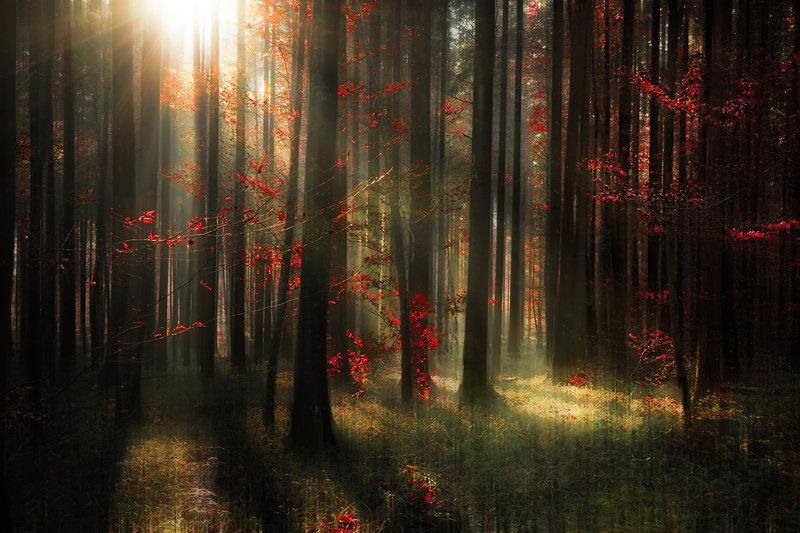 bosques-misteriosos-del-mundo-alemania-otono