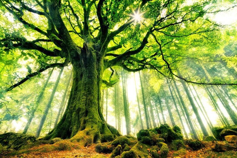 bosques-misteriosos-del-mundo-haya-bosque-brocelianda-bretana-francia