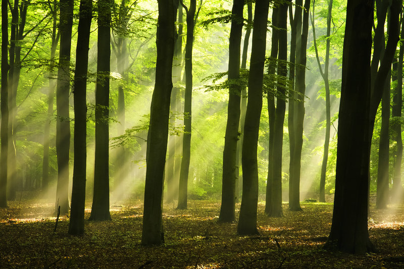 bosques-misteriosos-del-mundo-primavera-holanda