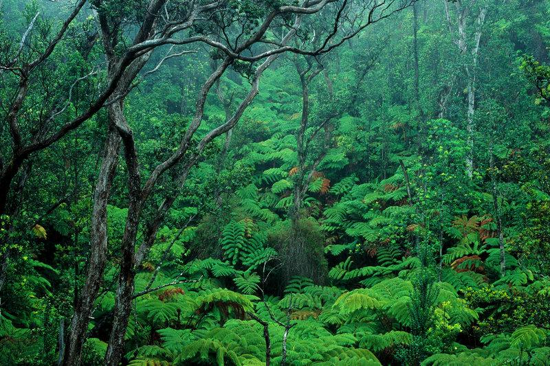 bosques-misteriosos-impresionantes-del-mundo-parque-nacional-volcanes-hawai
