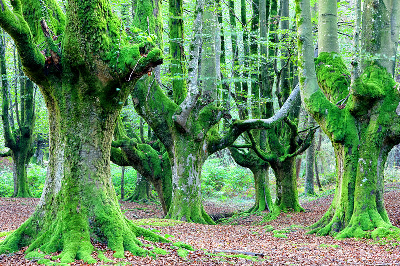 bosques-misteriosos-impresionantes-del-mundo-parque-natural-gorbea