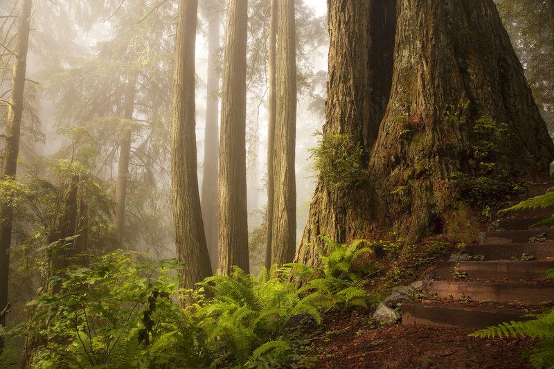 bosques-misteriosos-impresionantes-del-mundo-secuoyas-california