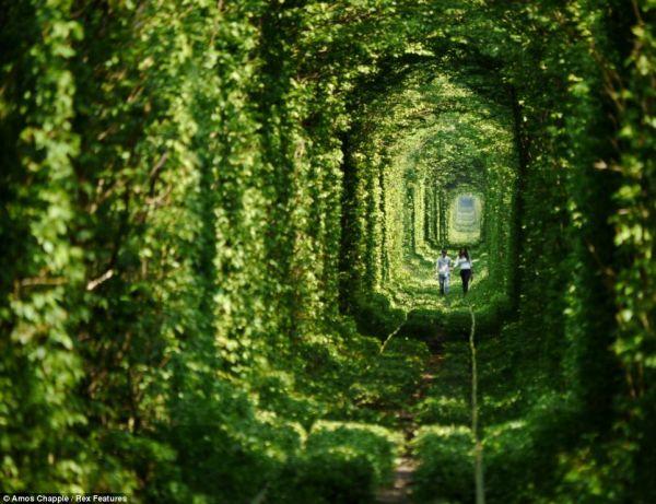 lugares reclamados por la naturaleza (13)