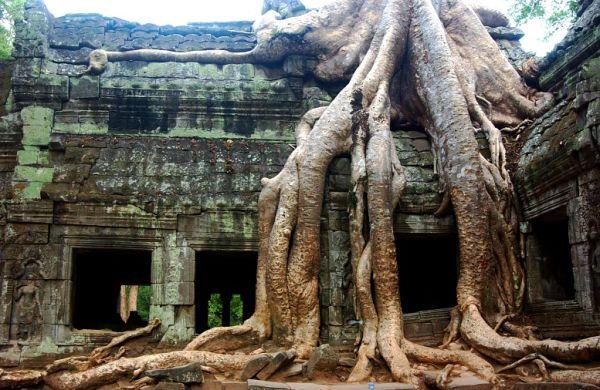 lugares reclamados por la naturaleza (8)