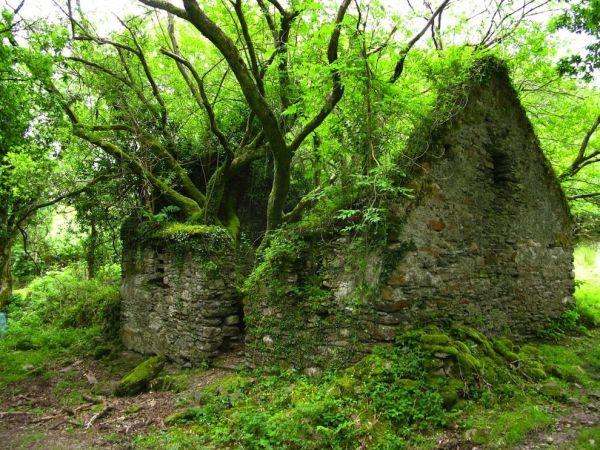 lugares reclamados por la naturaleza (9)